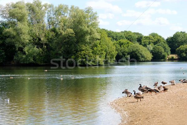Canada ganzen meer zomer rand Stockfoto © sarahdoow