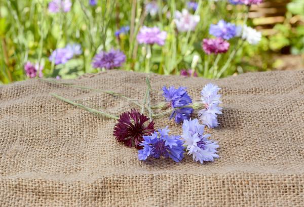 Cięcia worek niebieski fioletowy kłamać Zdjęcia stock © sarahdoow