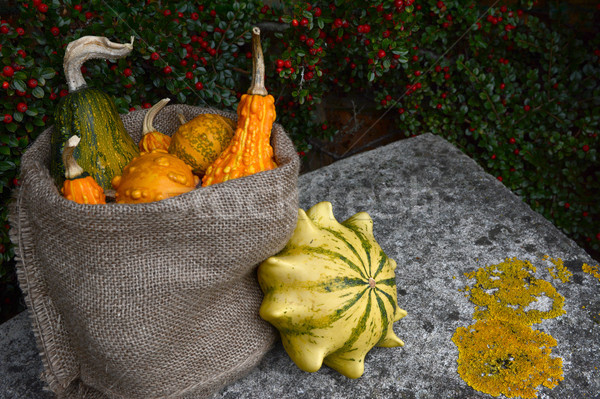 Hessian sack of ornamental gourds on a stone bench  Stock photo © sarahdoow