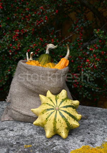Crown of Thorns gourd with sack of ornamental squashes  Stock photo © sarahdoow