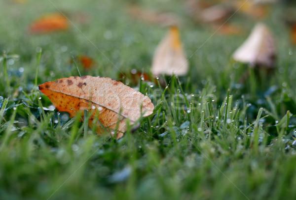 Narancs ősz levél fű ősz szelektív fókusz Stock fotó © sarahdoow