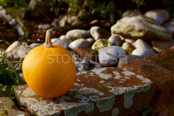 小 オレンジ カボチャ 壁 石 砂利 ストックフォト © sarahdoow