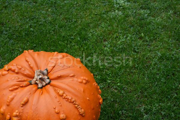 Parlak turuncu kabak bereketli yeşil ot bo Stok fotoğraf © sarahdoow