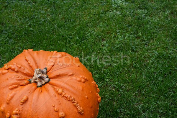 Bright orange warty pumpkin on lush green grass Stock photo © sarahdoow