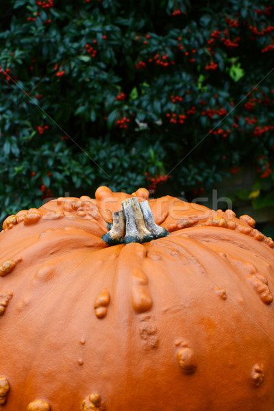 Grande laranja abóbora vermelho textura Foto stock © sarahdoow