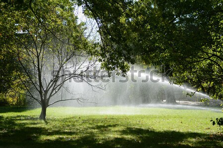 Sunlight shines through trees and water from a sprinkler Stock photo © sarahdoow
