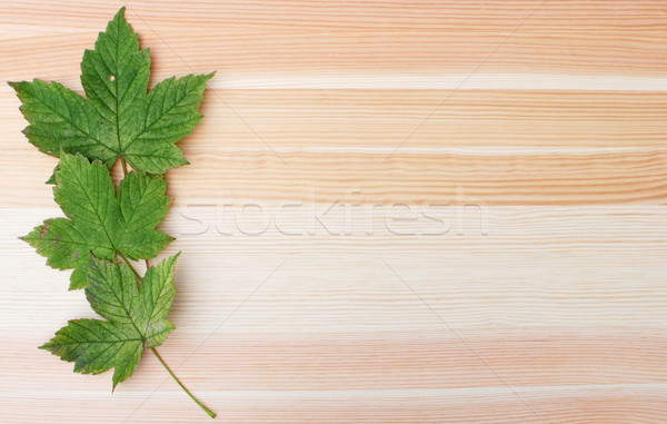 Three green sycamore leaves on a wooden background Stock photo © sarahdoow