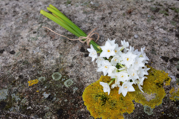 Narcissi tied with twine, lying on a stone bench Stock photo © sarahdoow
