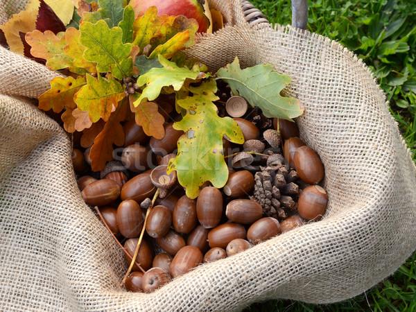 Rustykalny koszyka spadek dąb pozostawia jesienią Zdjęcia stock © sarahdoow