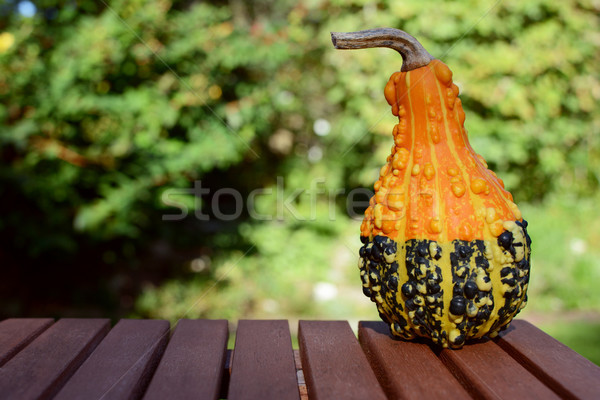 Warty orange and green ornamental gourd on wooden table Stock photo © sarahdoow