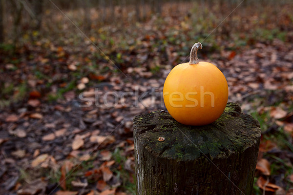Small orange gourd on a wooden post in fall woodland Stock photo © sarahdoow