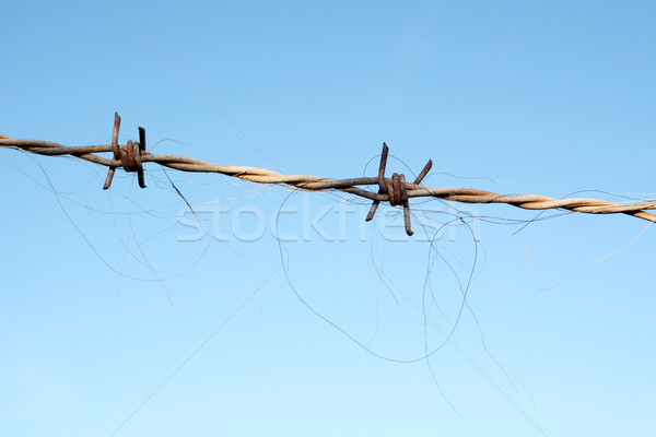 Horse hair trapped in barbed wire Stock photo © sarahdoow