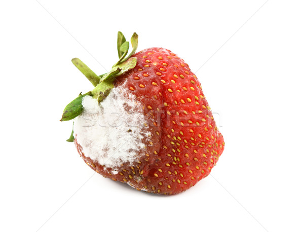 Red strawberry with a patch of mold Stock photo © sarahdoow