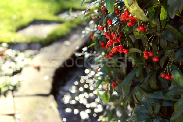 Rood bessen landelijk tuin selectieve aandacht water Stockfoto © sarahdoow