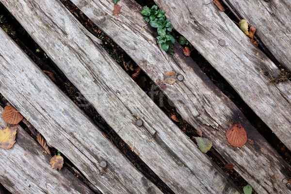 Diagonal rough timber with fall leaves Stock photo © sarahdoow
