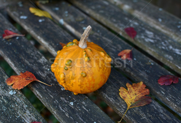 Small orange and green ornamental gourd on an old bench Stock photo © sarahdoow