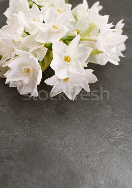Cluster of white narcissus blooms on mottled grey background Stock photo © sarahdoow
