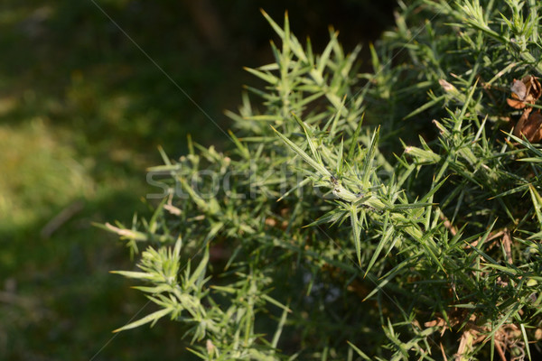 Hangya bokor sétál természet zöld makró Stock fotó © sarahdoow