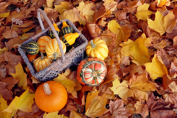 Basket of ornamental gourds with pumpkin and two squashes Stock photo © sarahdoow