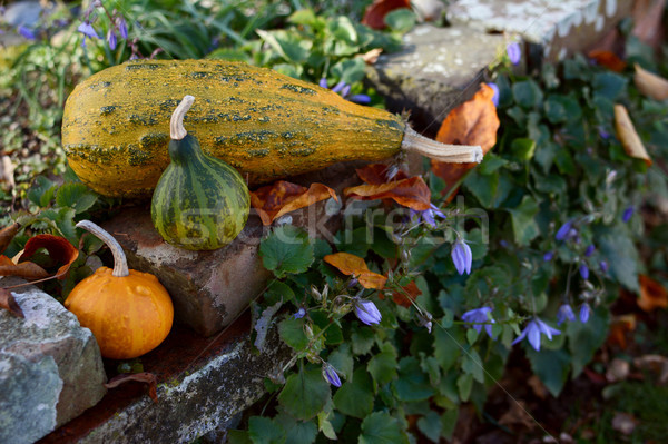 Ornamental gourds on a rustic rockery wall Stock photo © sarahdoow