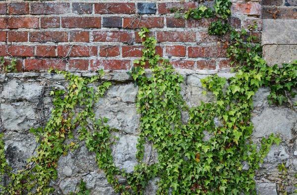 Lierre rêche mur de briques vert escalade patiné Photo stock © sarahdoow