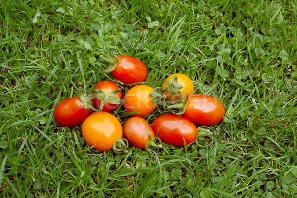 Handful of rainbow cherry plum tomatoes  Stock photo © sarahdoow