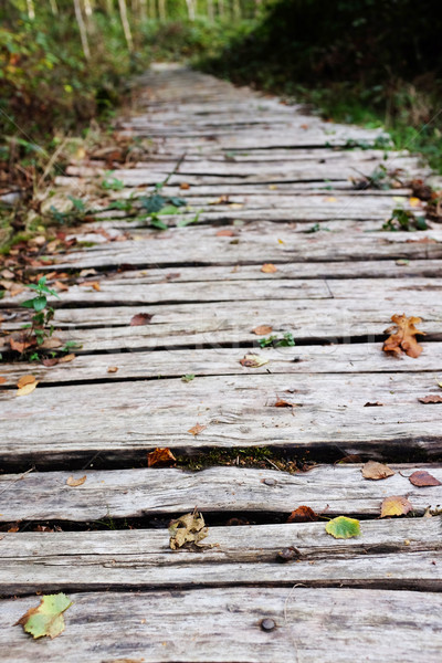 Wooden walkway leads into a wood Stock photo © sarahdoow