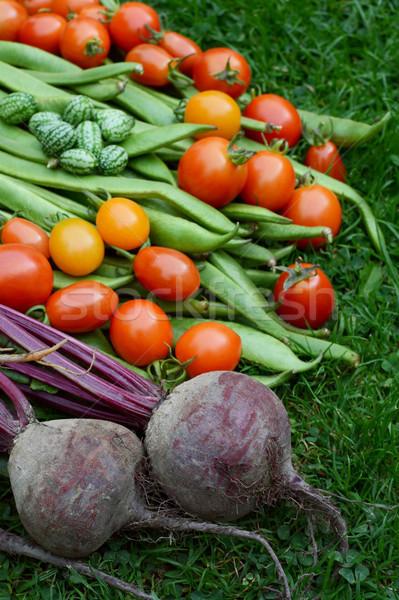 Foto stock: Roxo · raiz · de · beterraba · tomates · corredor · feijões · escuro