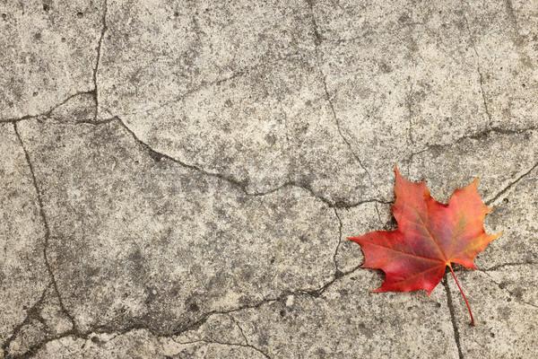 красный Maple Leaf треснувший конкретные осень аннотация Сток-фото © sarahdoow