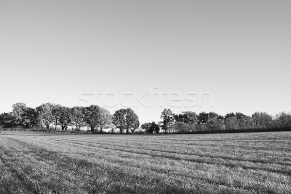 Foto d'archivio: Farm · campo · caduta · alberi · view · decidue