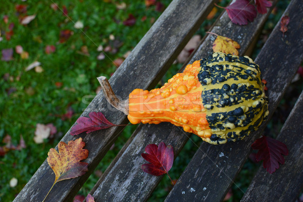 Bold orange and green warty ornamental gourd on bench  Stock photo © sarahdoow