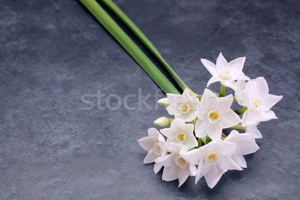 Two stems of small white narcissus flowers Stock photo © sarahdoow