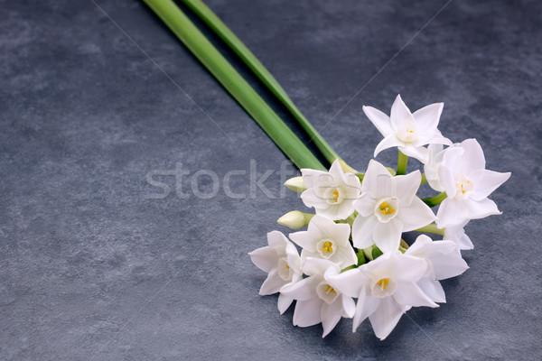 Twee klein witte bloemen exemplaar ruimte bloem Stockfoto © sarahdoow