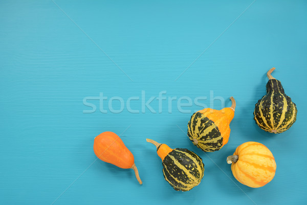 Five ornamental gourds and squash on a turquoise background Stock photo © sarahdoow