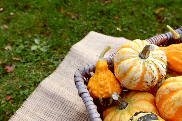 Boldly coloured and patterned gourds in a basket Stock photo © sarahdoow