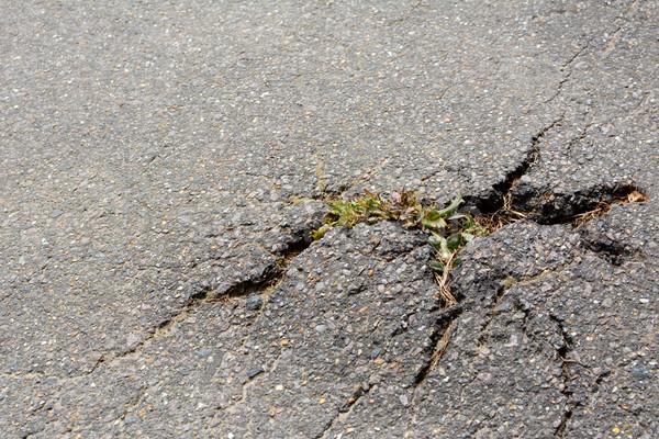 Pista planta grietas camino suelo asfalto Foto stock © sarahdoow