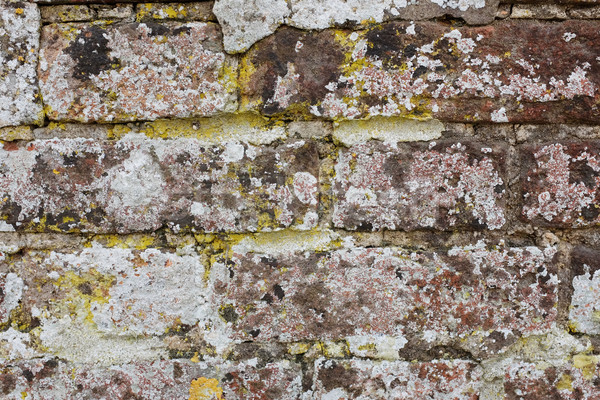 Weathered brick wall covered in lichen  Stock photo © sarahdoow