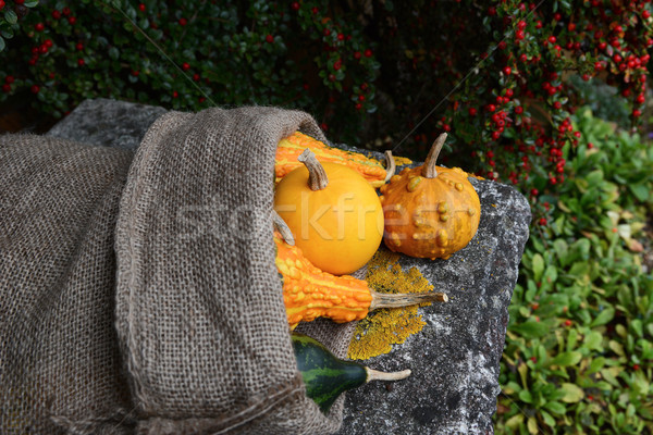 Smooth and warty ornamental gourds spilling from burlap sack Stock photo © sarahdoow