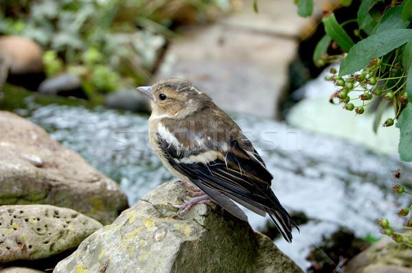 Foto stock: Bebé · rocas · alrededor · jardín · estanque · pequeño