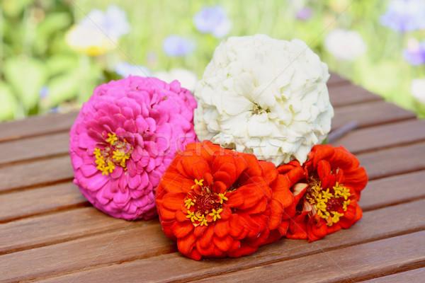 Monte quatro flores cortar jardim Foto stock © sarahdoow