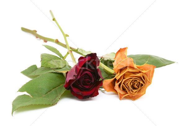 Two rose stems with dying flowers Stock photo © sarahdoow