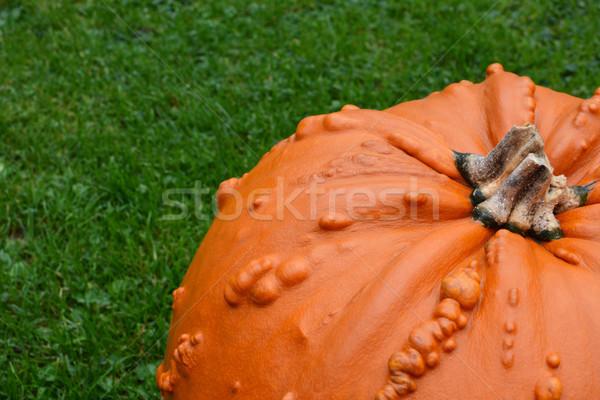 Primer plano brillante naranja calabaza hierba verde espacio de la copia Foto stock © sarahdoow
