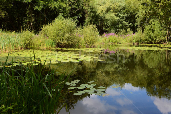 Lily pond surrounded by lush plants Stock photo © sarahdoow