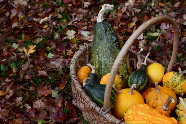 Basket filled with ornamental gourds among autumn hawthorn leave Stock photo © sarahdoow