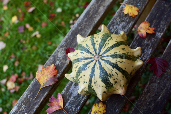 Striped Crown of Thorns ornamental gourd among fall leaves  Stock photo © sarahdoow