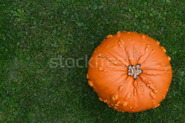 Oranje pompoen groen gras exemplaar ruimte gras natuur Stockfoto © sarahdoow