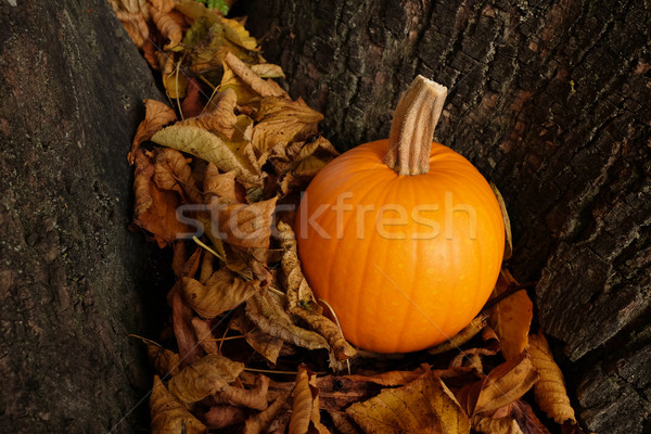 Orange pumpkin in dry autumn leaves against a tree trunk Stock photo © sarahdoow