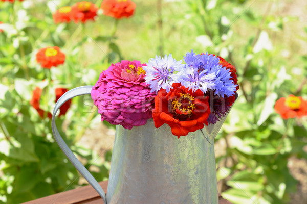 Bouquet of cornflowers and zinnia flowers in a pitcher  Stock photo © sarahdoow