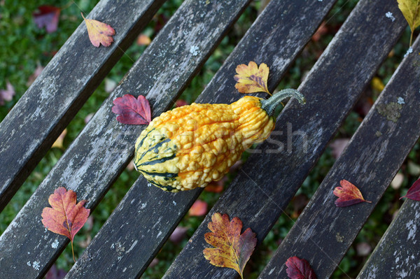 Warty-textured yellow and green gourd among autumn leaves Stock photo © sarahdoow