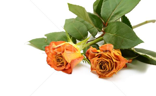 Twee oranje steeg bloemen natuur Stockfoto © sarahdoow